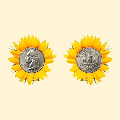 Sunflower, Yellow, sunflower, Plant, Flower, Metal,
