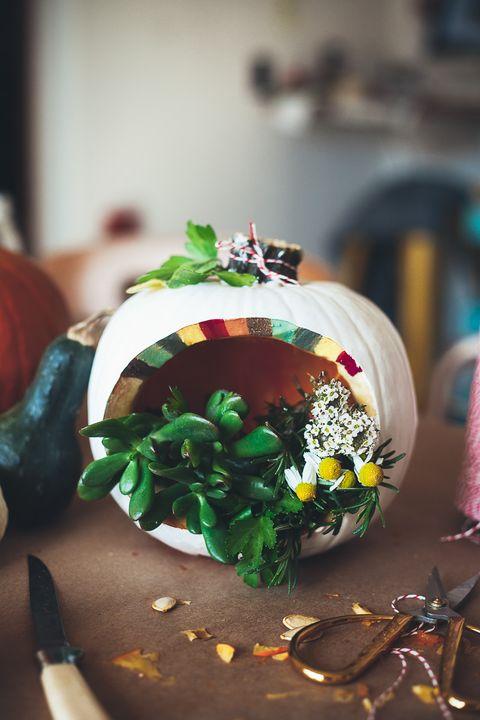 terrarium pumpkin
