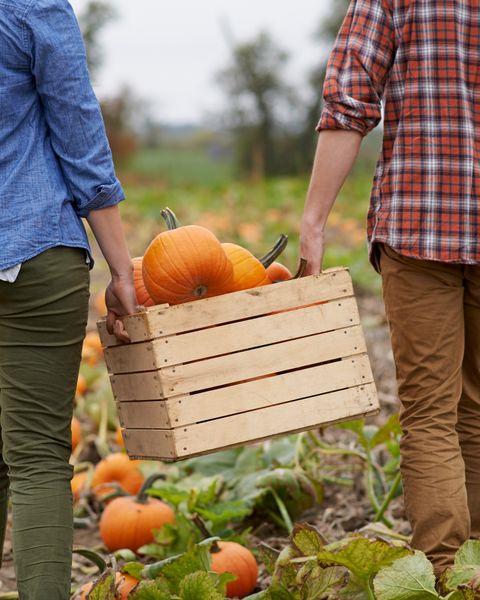 halloween date ideas pumpkin picking