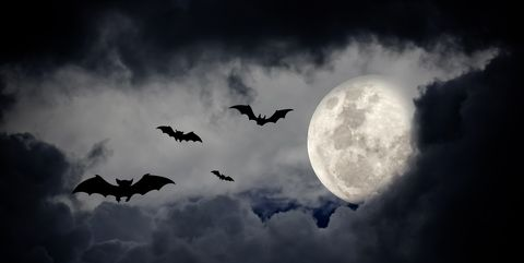 30 Best Halloween Quotes - Spooky Sayings to Wish a Happy ...