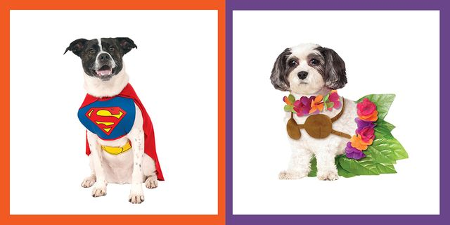 ed02b601eb54 35 Funny Dog Halloween Costumes - Cute Ideas for Pet Costumes