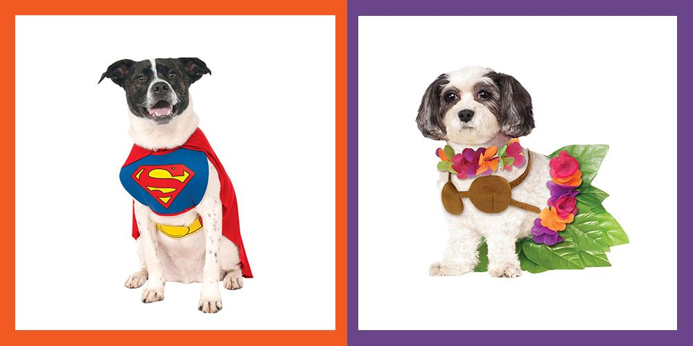 image. courtesy of rubieu0027s costume  sc 1 st  Womanu0027s Day & 28 Funny Dog Halloween Costumes - Cute Ideas for Pet Costumes
