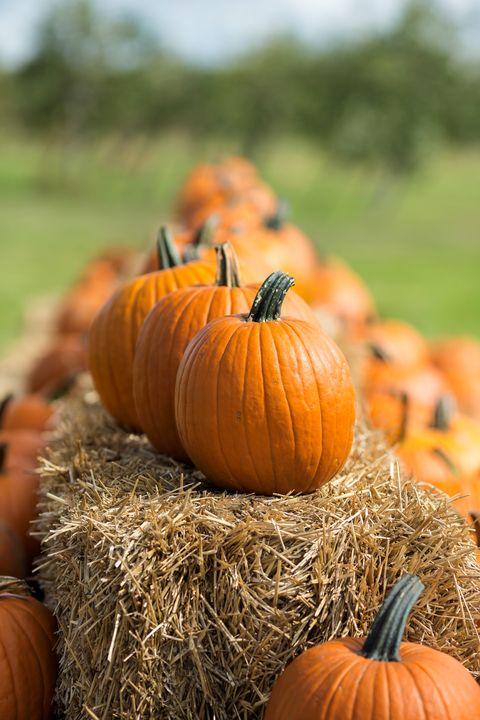 halloween family activities pumpkin