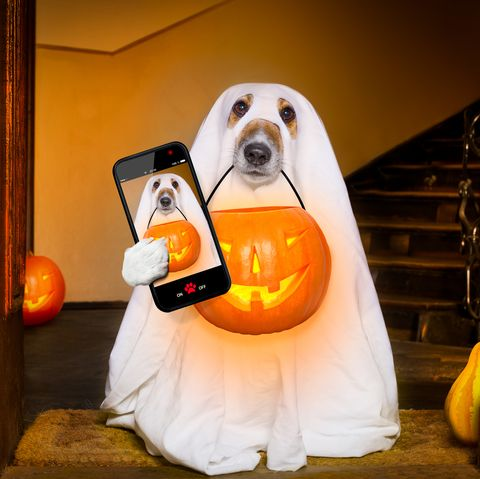 95 Best Halloween Captions for Instagram - Cute Photo Captions for Halloween