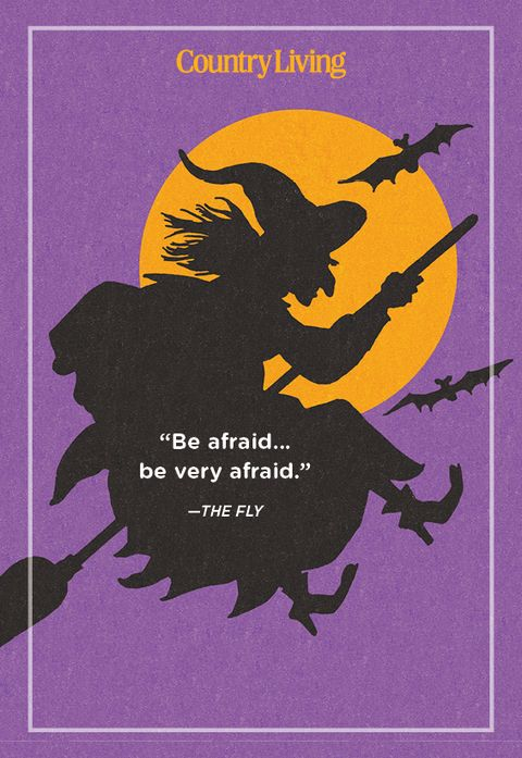 quote from the fly