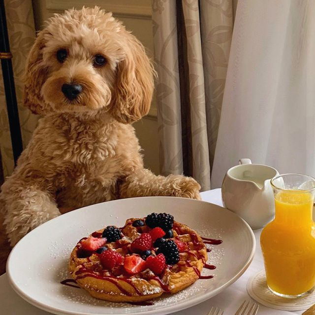 best pet and dog friendly hotels