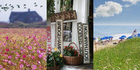 Summer, Flower, Wildflower, Spring, Plant, Vacation, Sea, Coast, Tourism, Travel,