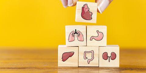 Hand arranging internal organ icons