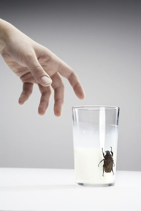 Hand grasping at a glass with milk with a cockroach, close-up