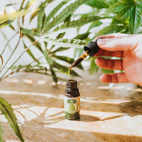 hand holding a cbd oil dropper beside bottle, surrounded by cannabis plants
