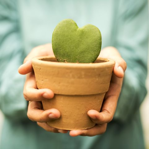hand holding flower pot