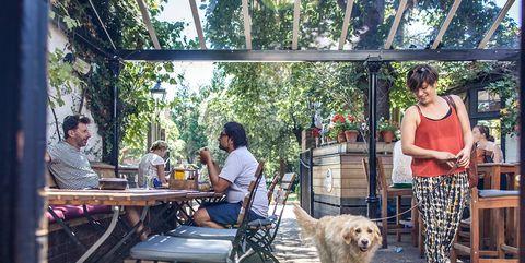 Best dog friendly pubs