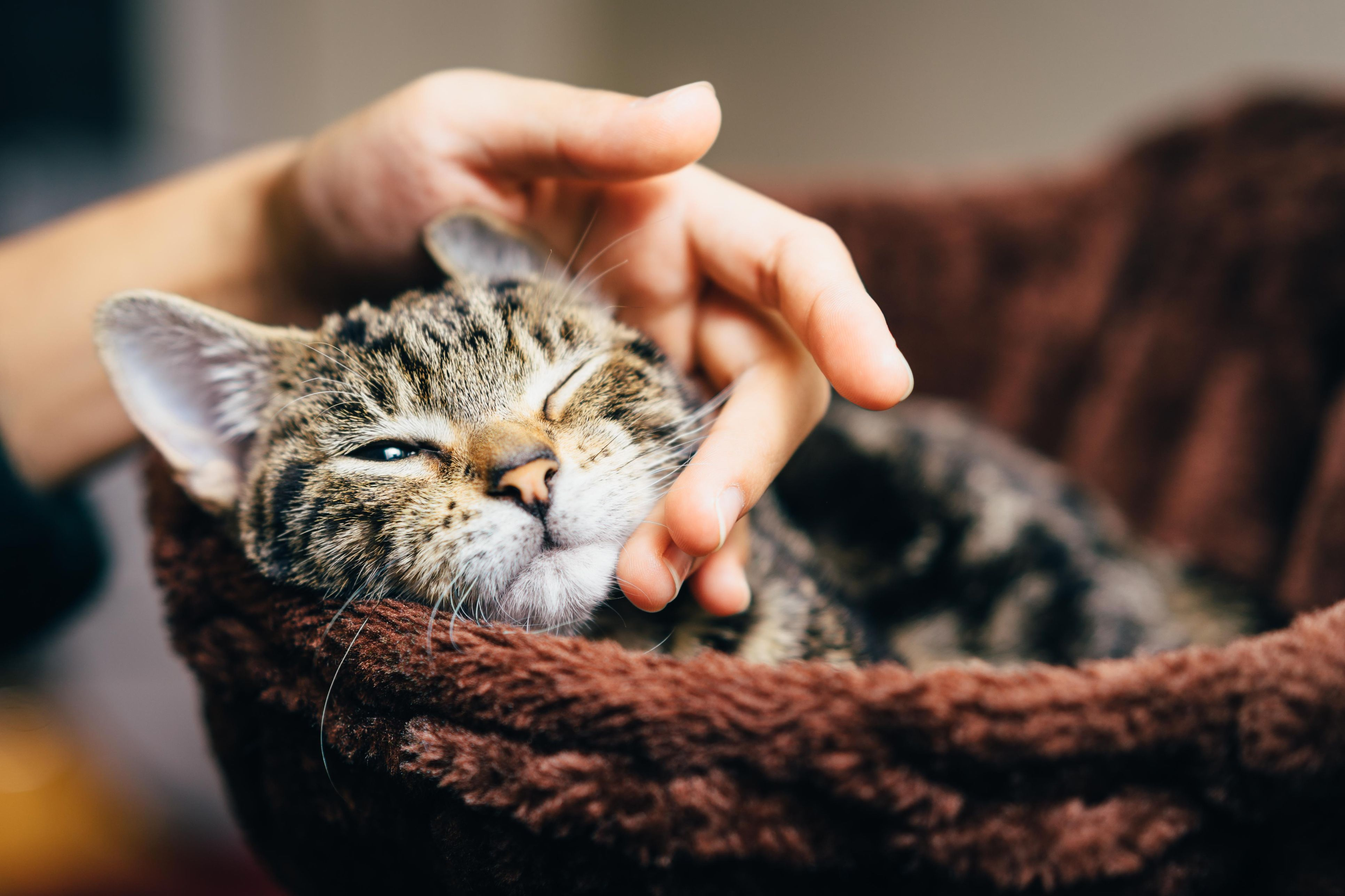 Best cute cat memes ideas on pinterest cat memes funny cat