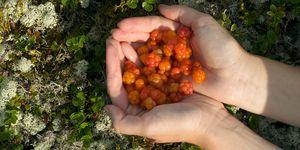 Handful of Cloudberries