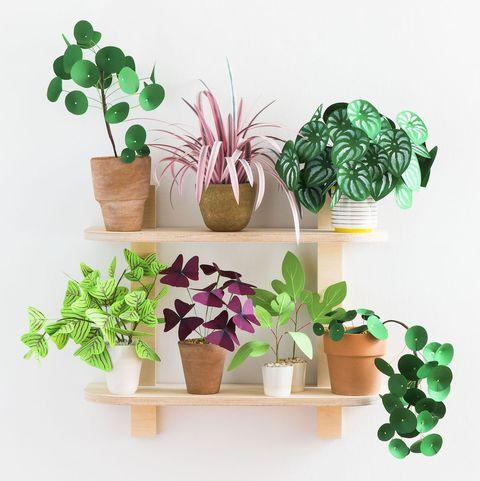 Flowerpot, Green, Houseplant, Echeveria, Leaf, Plant, Herb, Succulent plant, Shelf, Cactus,