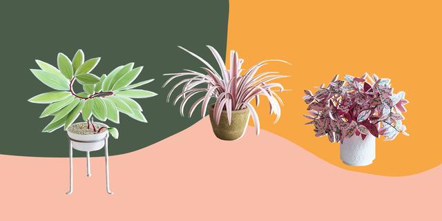 flowerpot, plant, illustration, botany, graphic design, flower, houseplant, organism, tree, echeveria,