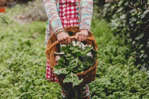 hands  holding basket with fresh green  vegetables