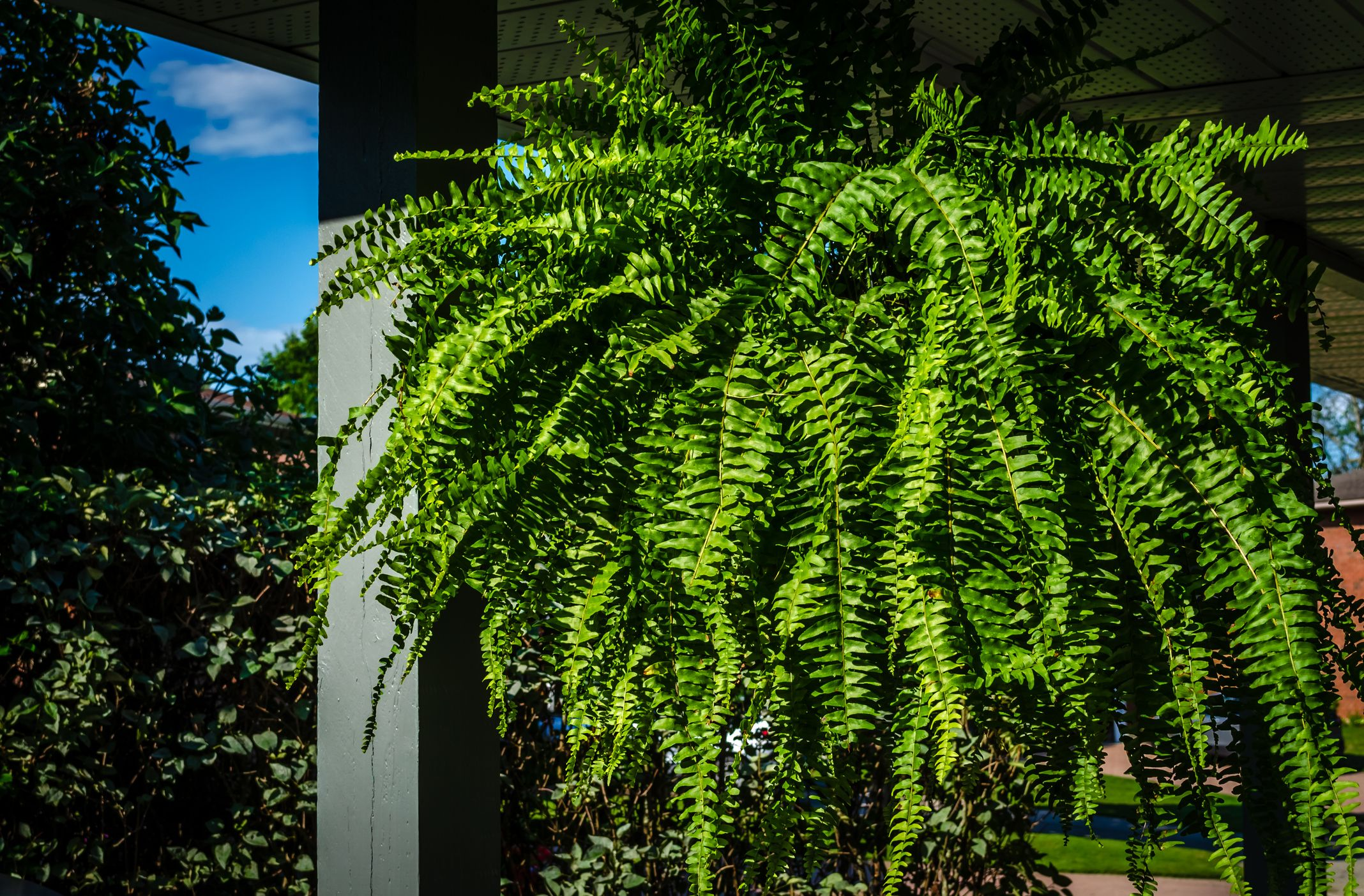 25 Best Front Door Plants Plants For Your Front Door