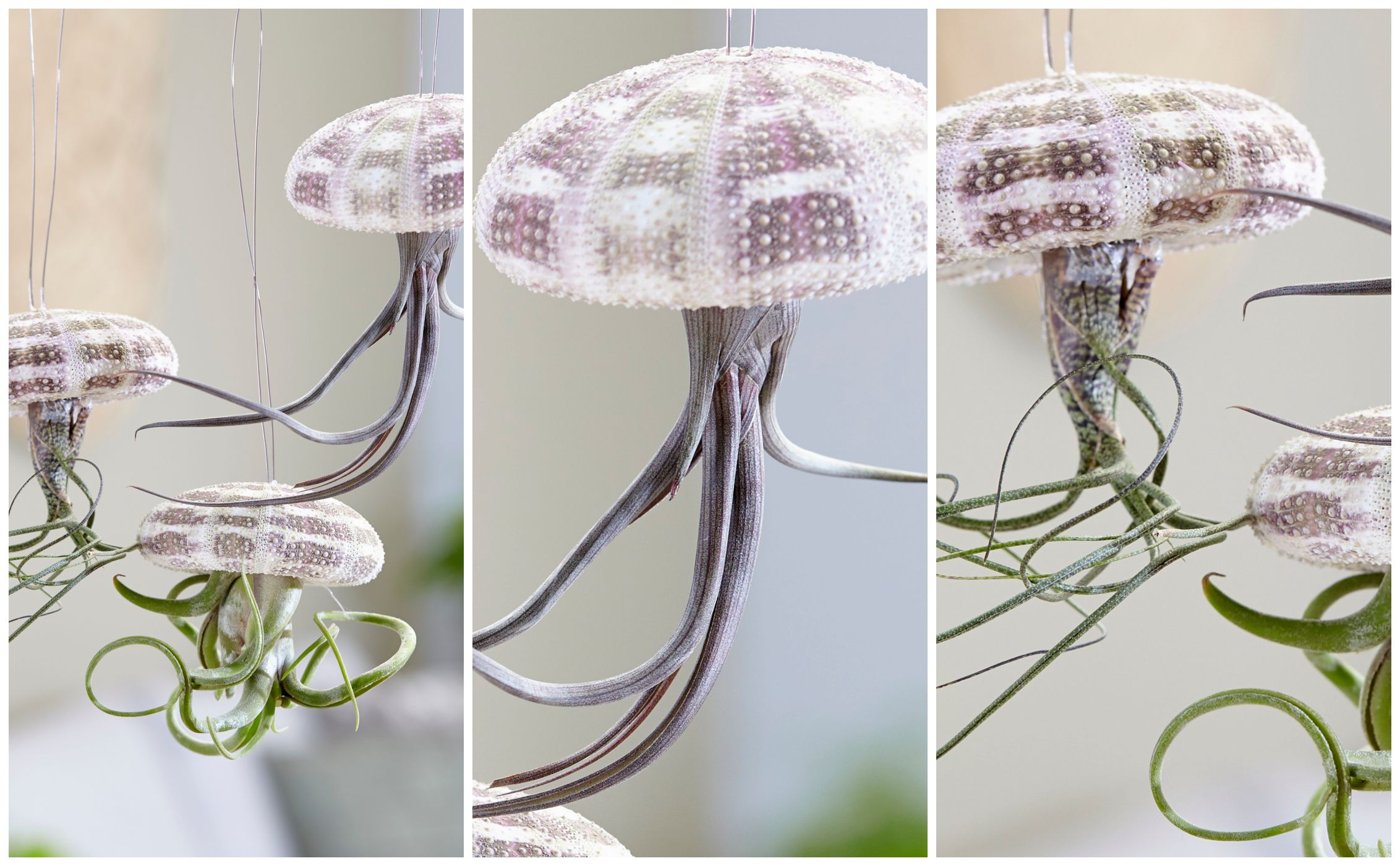 The hanging jellyfish air plant is the must-have houseplant of the moment