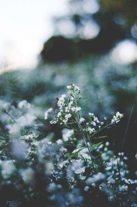 Flower, Plant, Spring, Leaf, Botany, Sunlight, Photography, Branch, Wildflower, Tree,