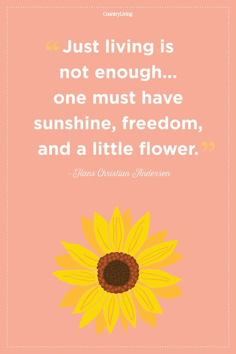 60 Inspirational Flower Quotes Cute Flower Sayings About Life And Love Classy Quote Pictures