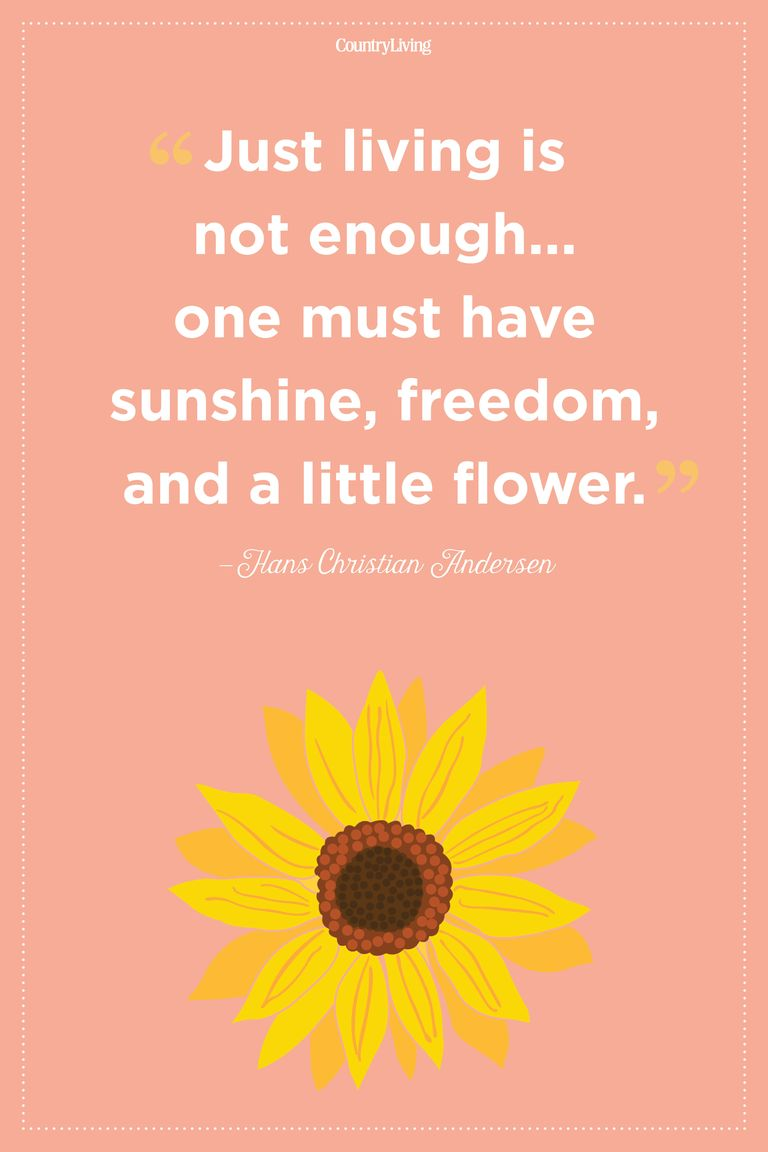 20 Inspirational Flower Quotes - Cute Flower Sayings About ...