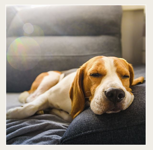 how to stop feeling tired the happiness project gretchen rubin
