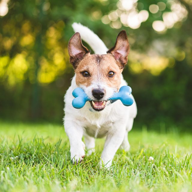 20 Best Dog Toys 2020 Fun Dog Toys For Big And Small Pets