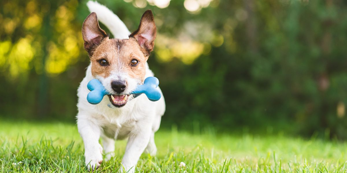 20 Best Dog Toys That Make for Hours of Fun for Every Type of Pup