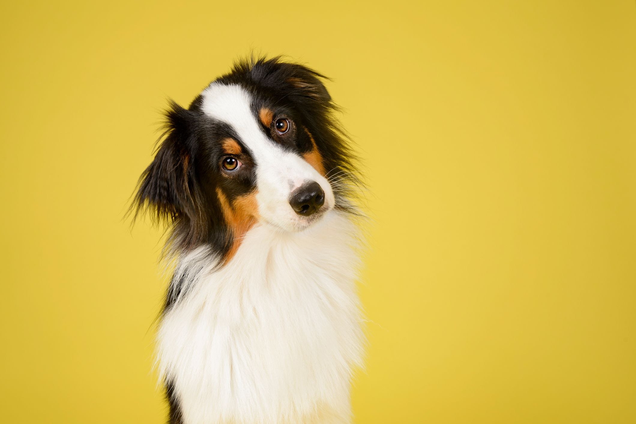 I Tried the Most Popular Dog DNA Tests to Find the Best One