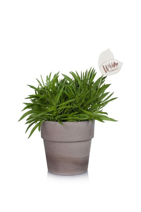 25 Best Indoor Plants For Apartments - Low-Maintenance ... Ze Plant At Home Depot on plants at homegoods, plants that repel mosquitoes, plants at harris teeter, plants at kroger, plants at disney, vines depot, plants at office depot, plants at michaels, plants at kmart, plants with white flowers, plants at cvs, plants under evergreen trees, plants at ikea, plants at tj maxx, plants inside home, plants at sam's club, plants at publix, plants that repel bugs and pests, plants at safeway, plants at menards,