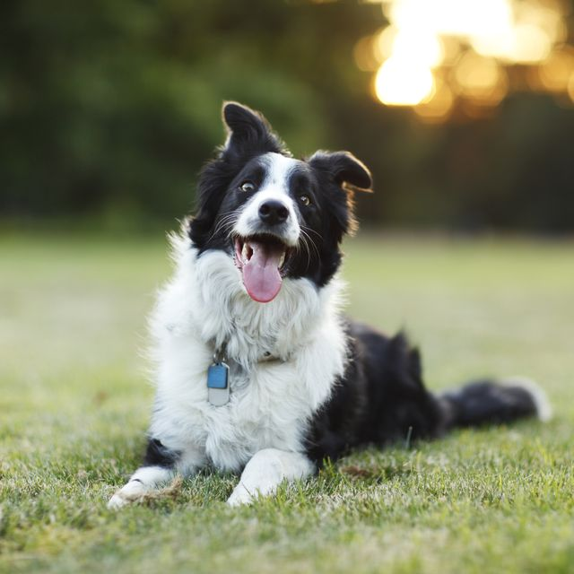 revealed 10 most popular lockdown dog and cat names