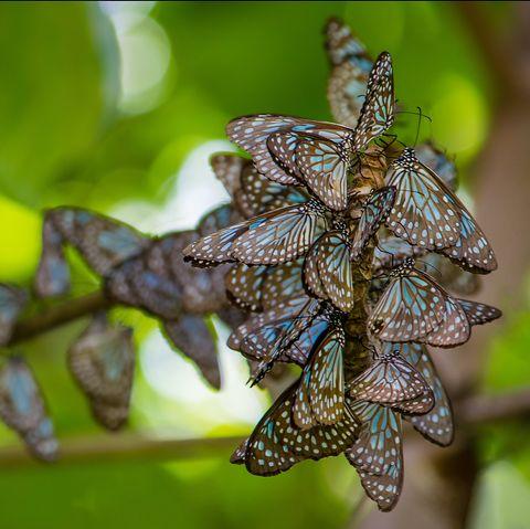 happy facts butterflies