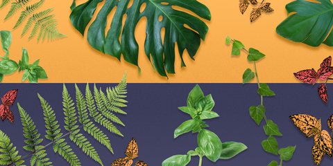 Mood-Boosting Plants