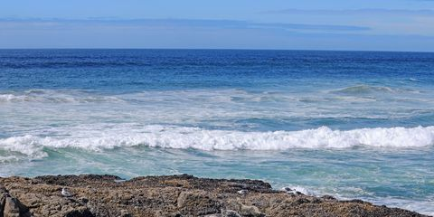 Seals sunning on offshore ocean rocks along the Oregon coast