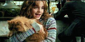 Harry Potter Hermione gato