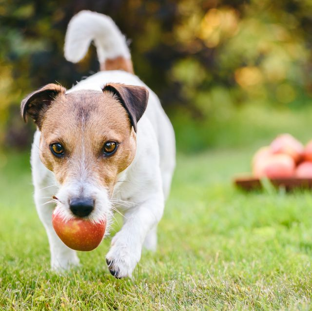 can dogs eat fruit vegetables
