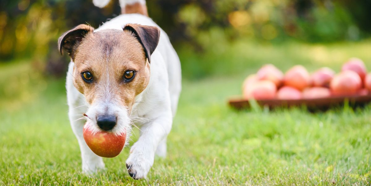 Can dogs eat fruits and vegetables? Here's everything you need to know