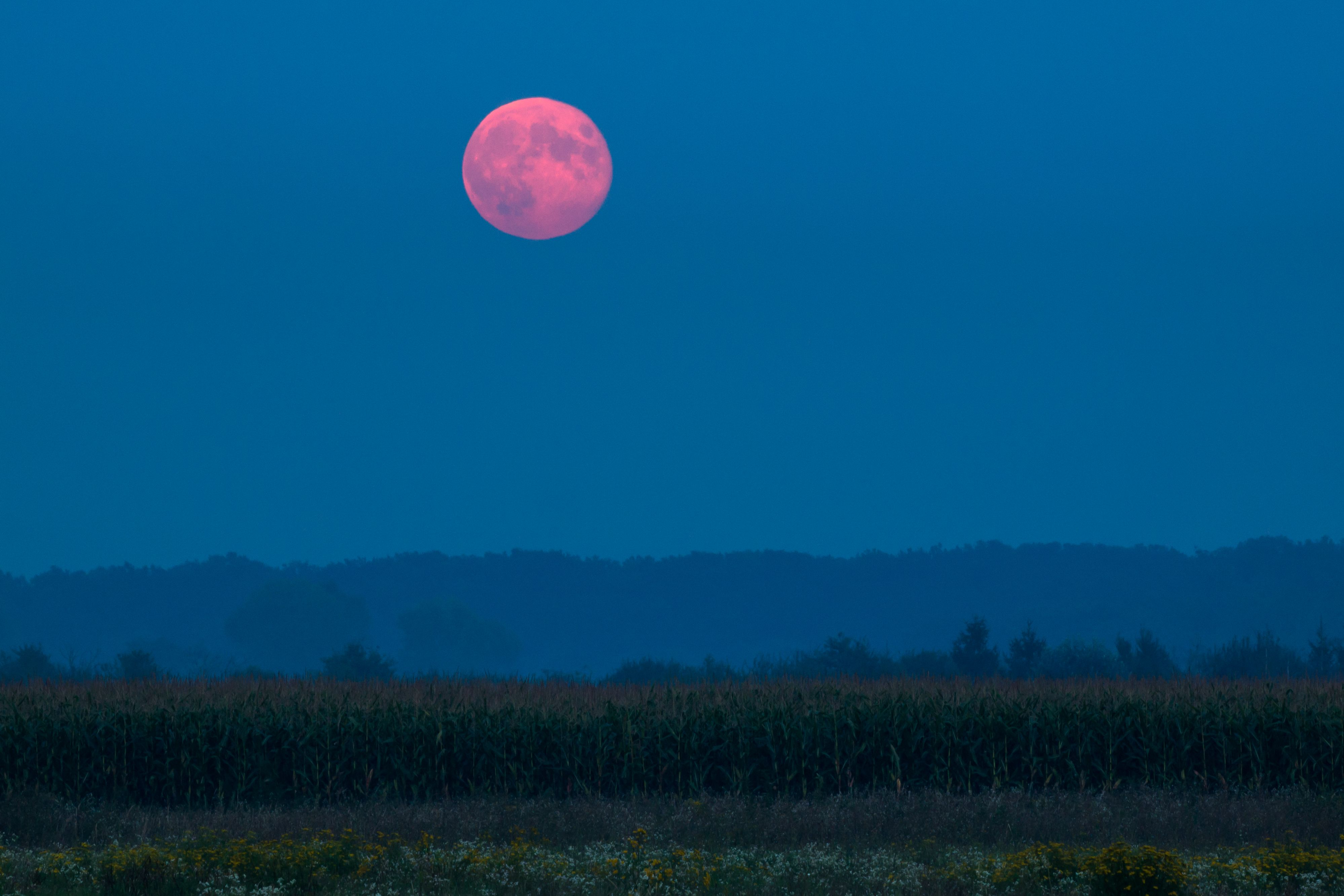 Harvest Moon: When to see the September 2019 full moon