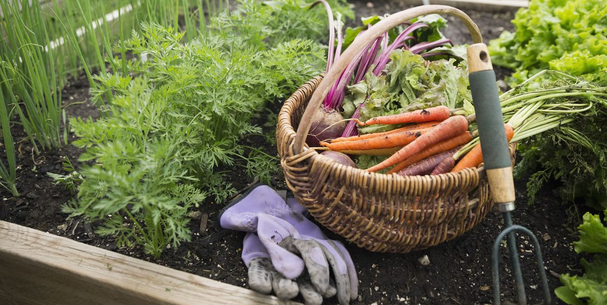 How to Plant a Fall Garden and Grow Late-Season Crops