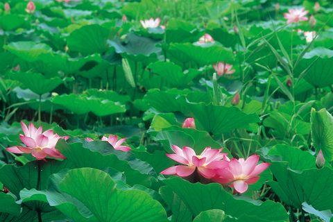「皇居東御苑」は365日花盛り