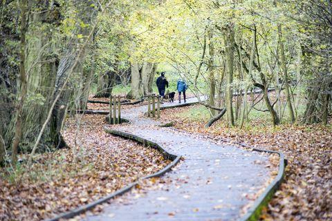 Hatfield Forest, UK, in Autumn