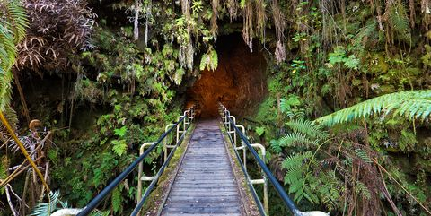 Vegetation, Nature reserve, Natural environment, Tree, Forest, Rainforest, Natural landscape, Jungle, Valdivian temperate rain forest, Walkway,