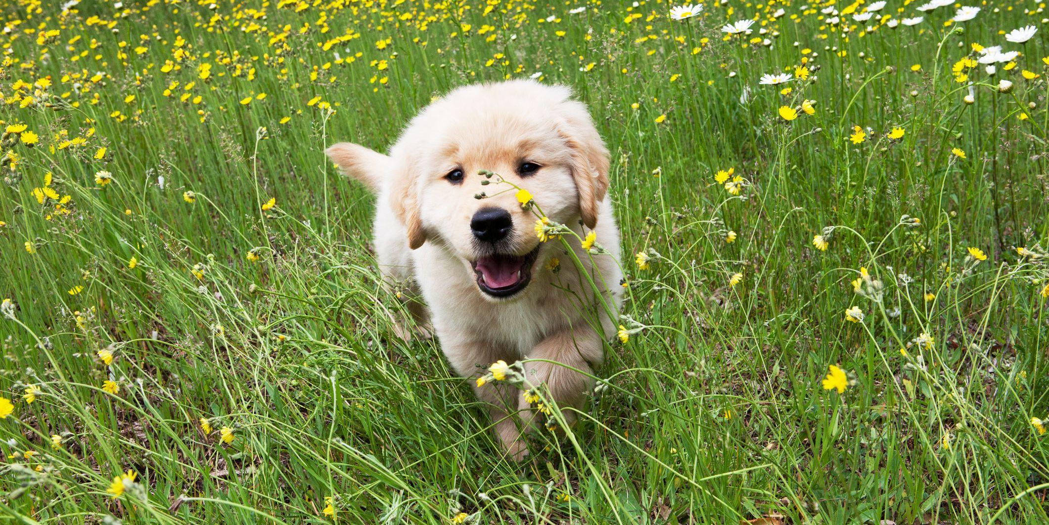 dog field flowers