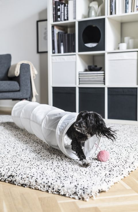 Pet Play Tunnel