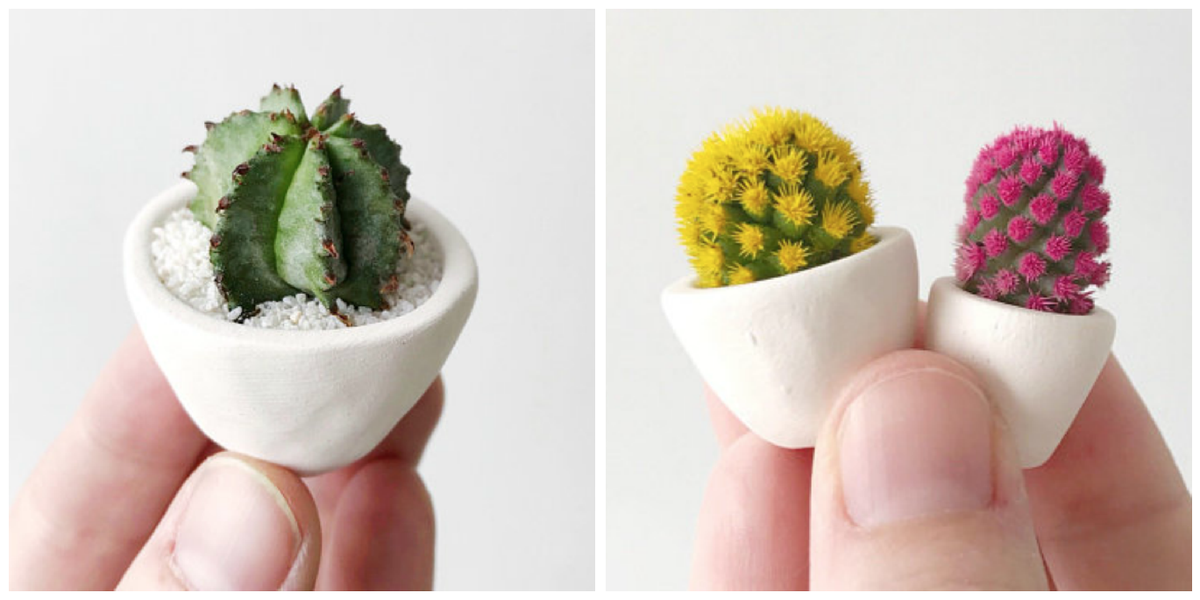 This Micro Cactus Trend Is Too Cute Joanna Gaines Loves