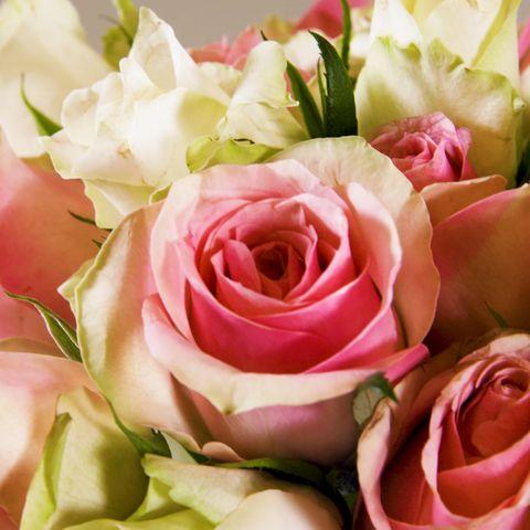 How To Arrange Roses Like A Professional Florist Rose Arranging Tutorial Video