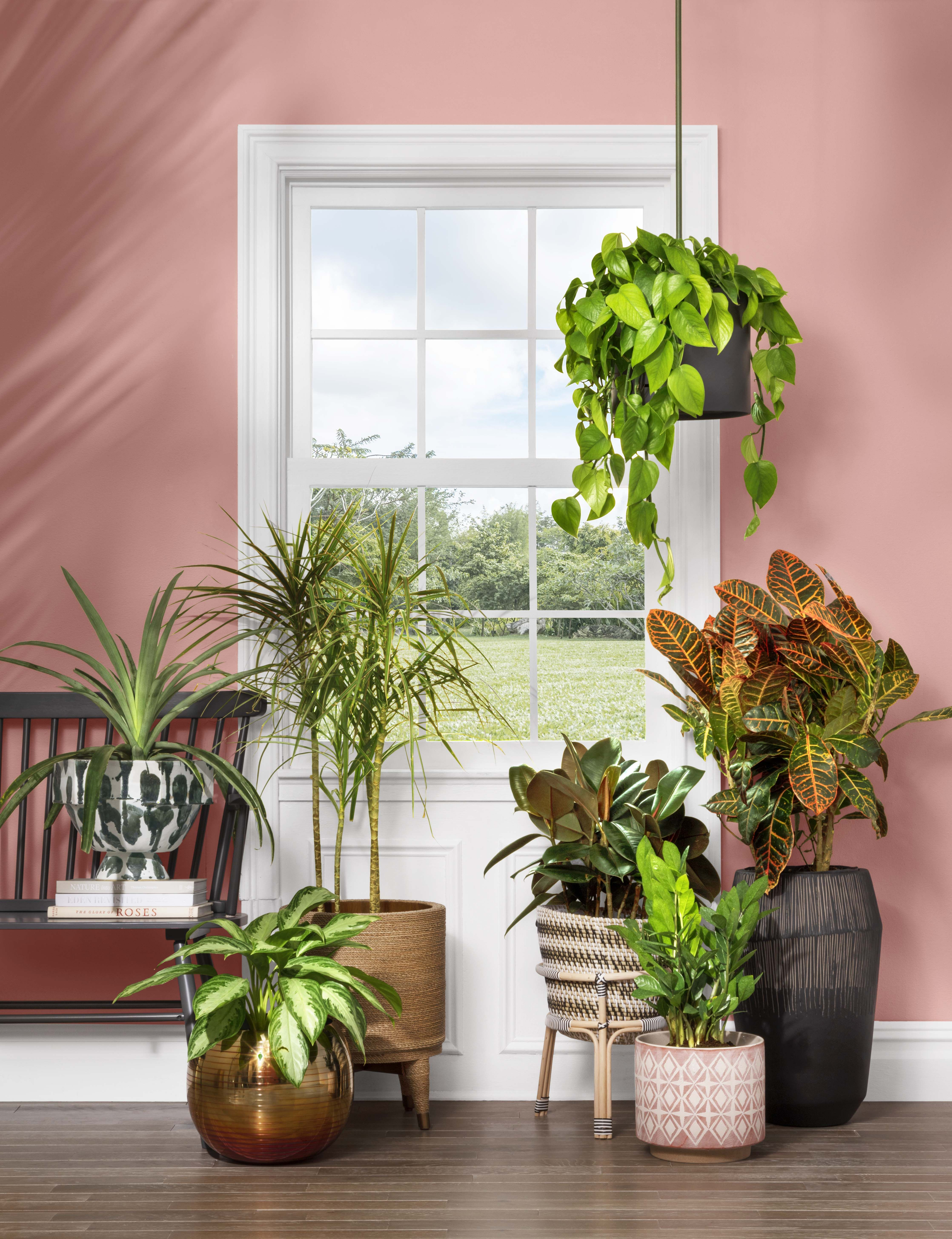 Affordable Indoor Flower Pots For Your