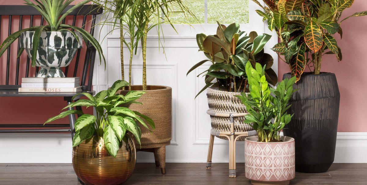 Image correspondant à l'aternative Plantes purificatrices d'air