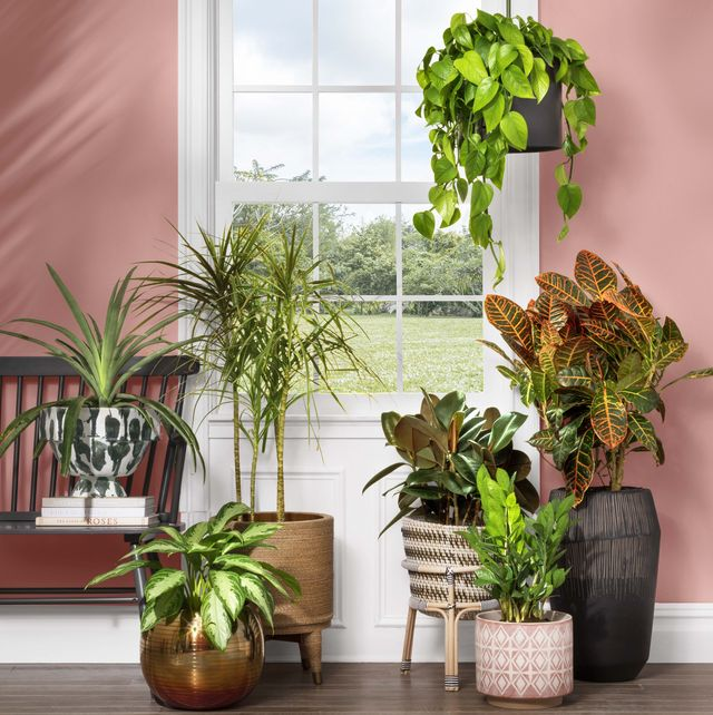 20 Stylish Indoor Planters Affordable
